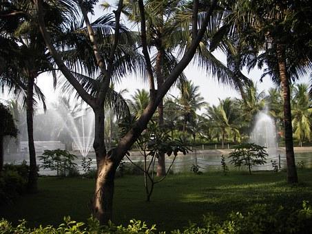 palm-trees-193021__340